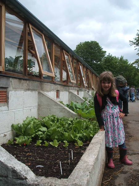 little girl admires the salad produce growing by the greenhouse at windmill hill city farm
