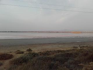 Larnaka Salt Lake, November 2020