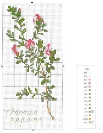 Motivi per punto croce  a tema fiori e spezie