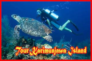 paket diving hotel