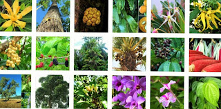 Pembagian Persebaran Flora di Indonesia