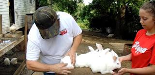 Gambar kelinci jenis new zealand lucu