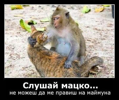 Слушай мацко.. не можеш да ме правиш на маймуна!