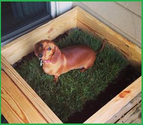 Orina De Perros Y Gatos Dentro De Casa Consejos De Limpieza Trucos Tips Y Remedios Del Hogar