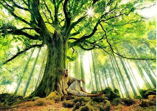 Risultati immagini per Riciclaggio della memoria bioregionalismo, ecologia profonda spiritualità laica
