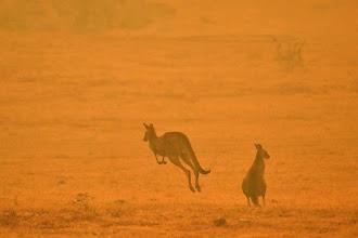 Incêndios na Austrália: Sydney está sob ameaça de cortes de energia; número de mortos sobe para 23