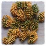 http://www.foamiran.pl/pl/p/srodki-do-kwiatow-zielono-zolte-/797