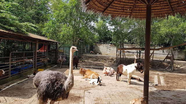 farm attractions, farm in the city, malaysia farm, tourism, tourist attraction seri kembangan, tourist attractions selangor, travel,
