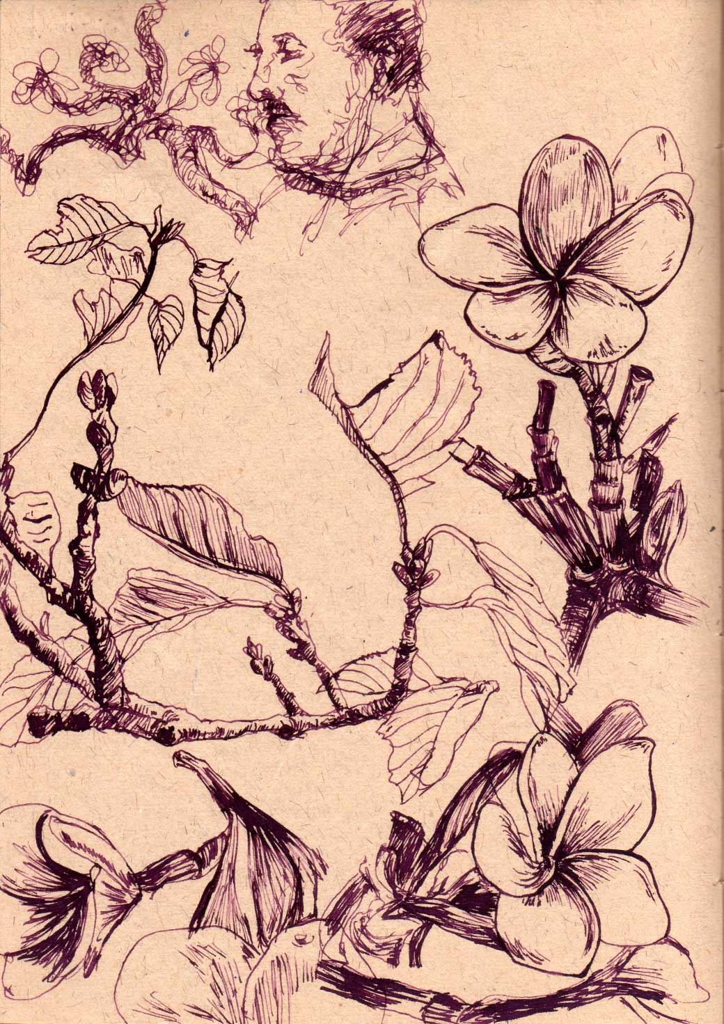 Botanical Ink Sketches