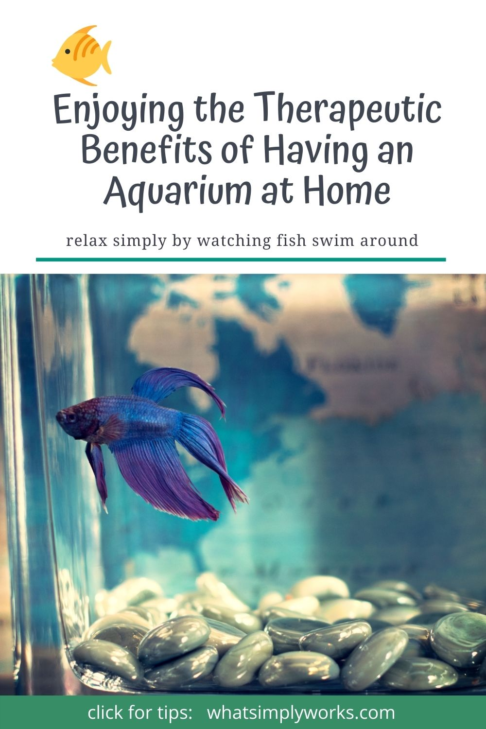 Enjoying the Therapeutic Benefits of Having an Aquarium at Home