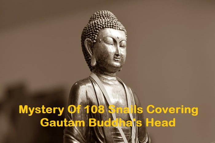 What is the real mystery behind 108 dried snails covering Gautam Buddha's head?