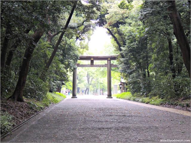 Torii del Santuario Meiji, Tokio
