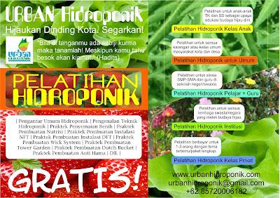 pelatihan hidroponik gratis, urban hidroponik, urban farming