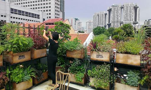 Ide Urban Farming di Rumah