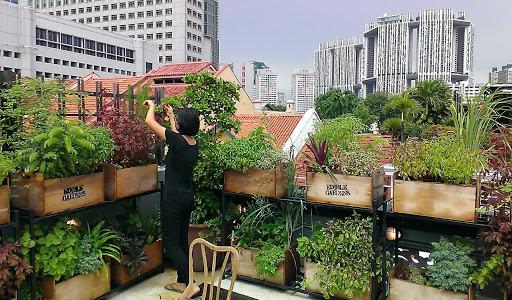 12 Ide Urban Farming di Rumah yang Inspiratif dan Menguntungkan