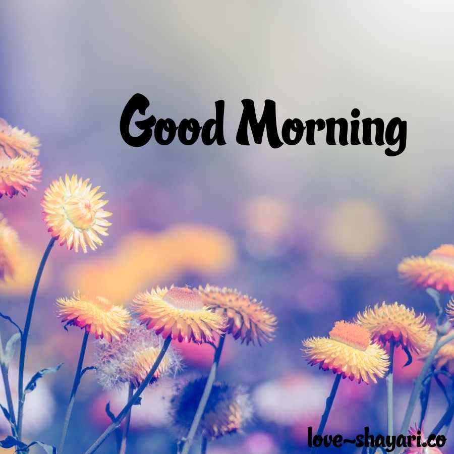 good morning beautiful nature images
