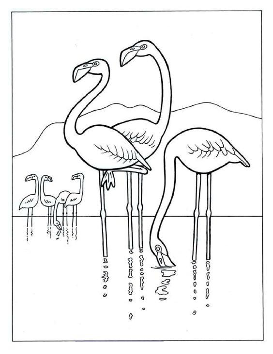 Tranh tô màu con chim hồng hạc đẹp