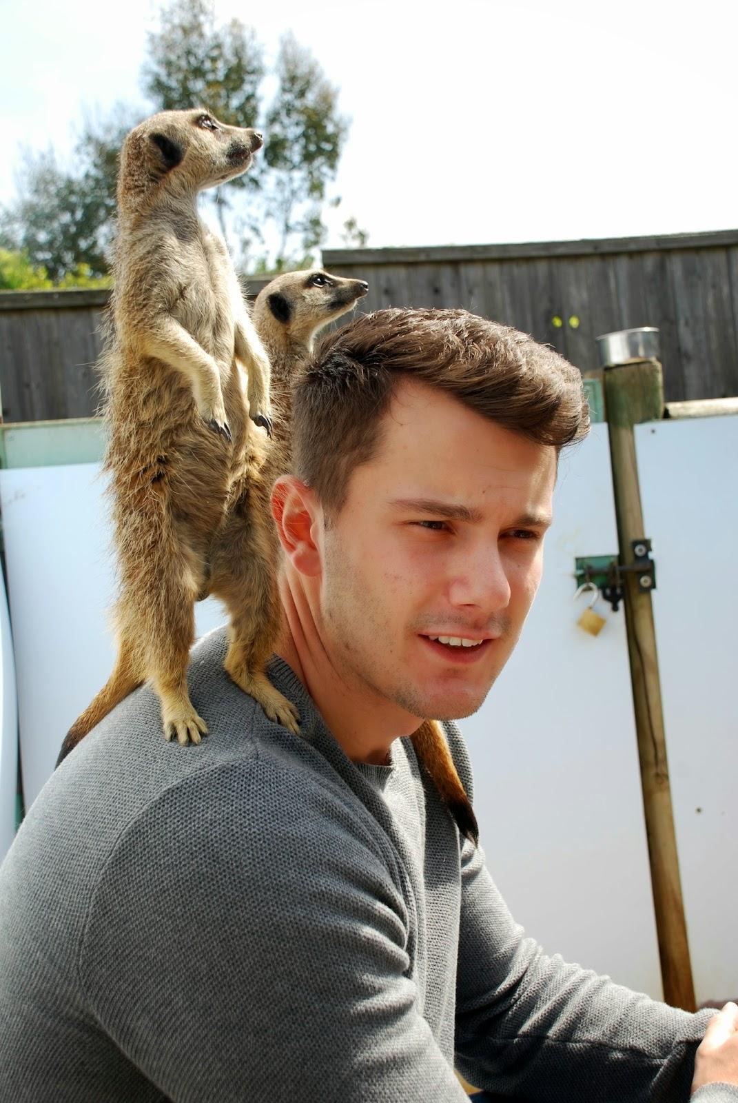 Meerkats climbing on Jonny at paradise wildlife park