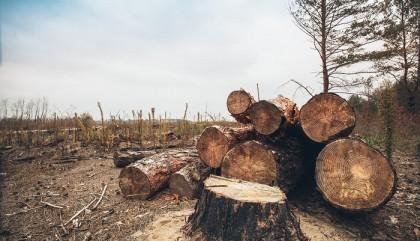 Deforestation Paragraph | Education Web
