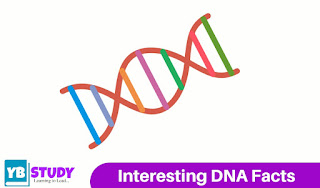 Interesting DNA Facts