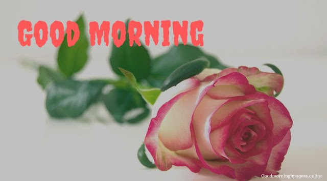 Good Morning Images In Roses 15