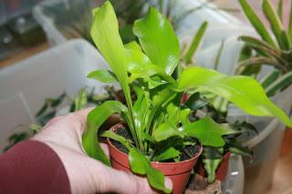plantas terrarios
