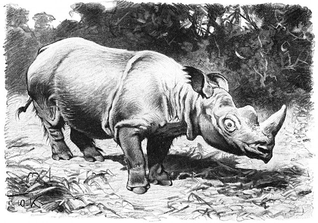 Cultural evolution caused broad-scale historical declines of large mammals across China
