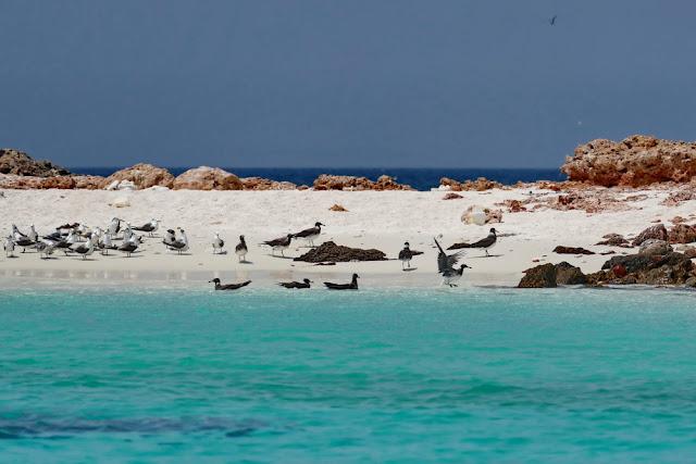 snorkeling, schnorcheln, daymaniyat, islands, inseln, fische, korallen, oman, Muscat, unterwasser, meer, strand, möven, Vögel, brüten, birds, beach, traumstrand
