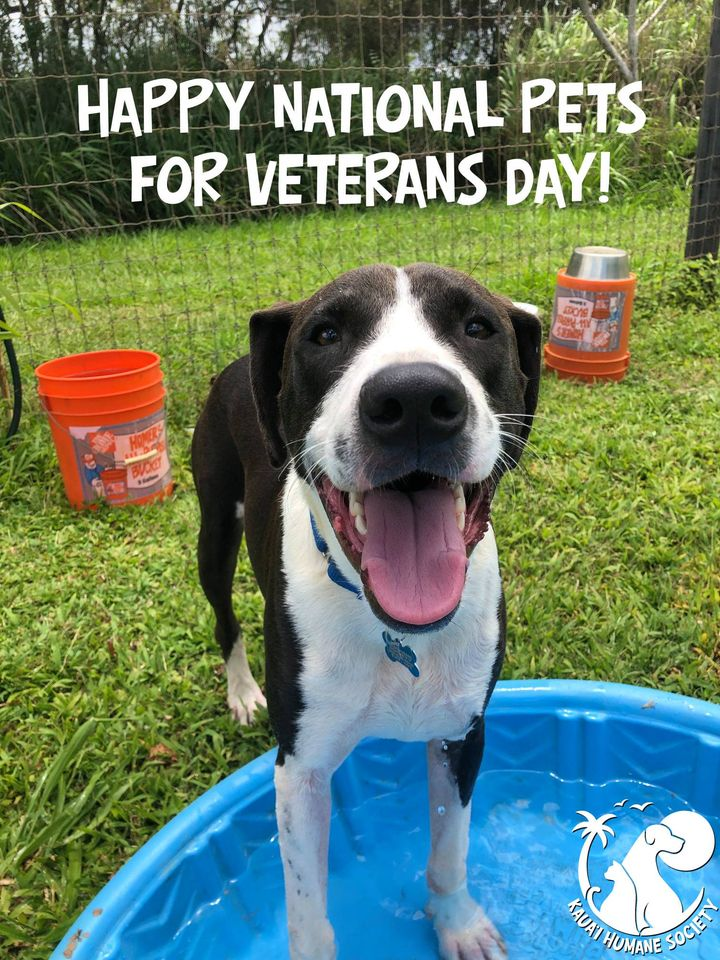 National Pets for Veterans Day Wishes for Whatsapp