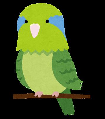 マメルリハインコのイラスト(緑)