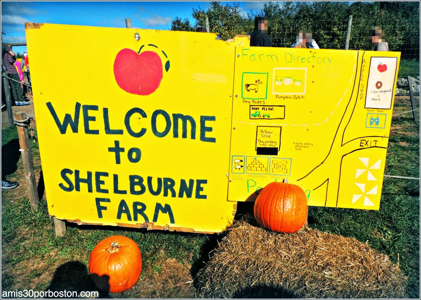 Cosecha de Manzanas: Shelburne Farm
