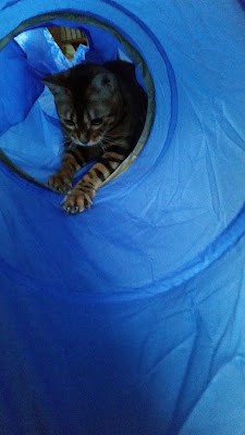 Cat tunnel from Amazon, review