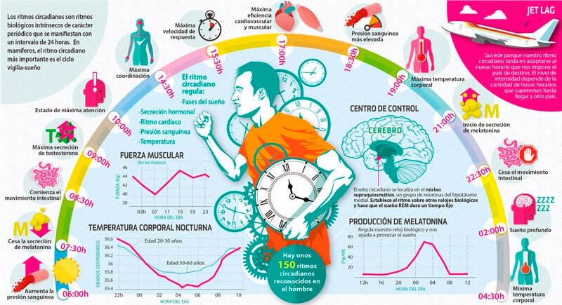 infografico-relogio-biologico