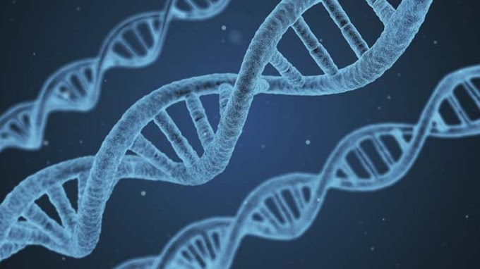 DNA structure and function. What is its role in present life.