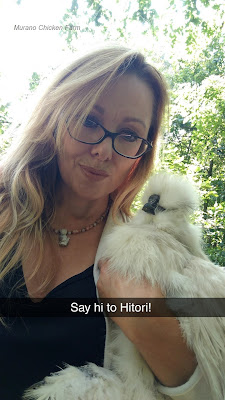 Friendly fluffy white chicken being held by blond lady