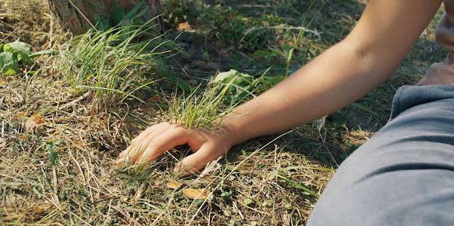 ما-الذي-يحدث-مع-تلك-القبيلة-مشهد-العشب-اليد-فيلم-Midsommar-2019