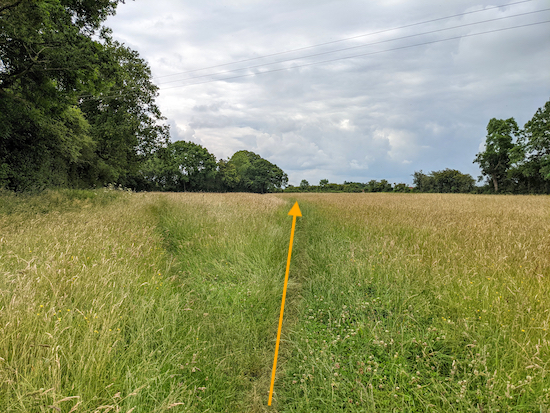 Take the right fork after the gate for Great Gaddesden footpath 13