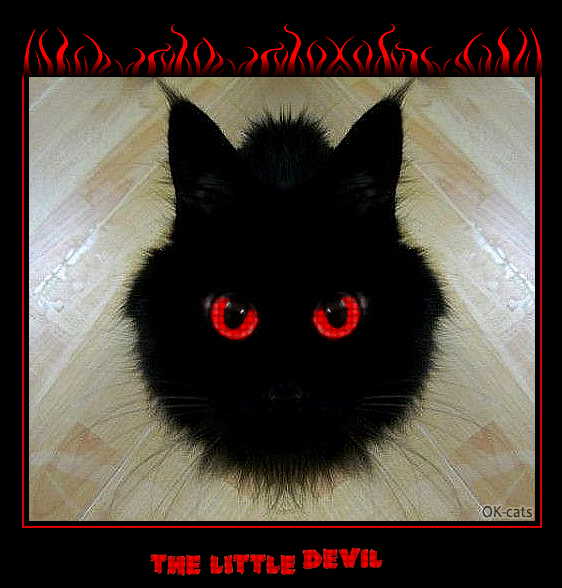 "Photoshopped Cat picture •  The black little devil is back. ""Hoomans, come to the dark side, we have cookies."