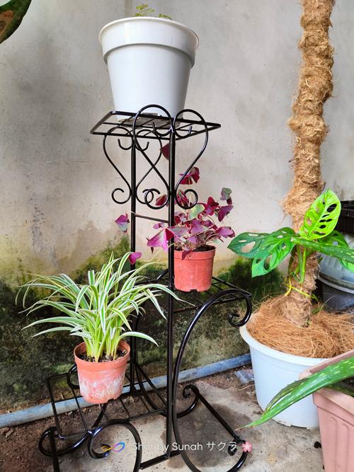 Hadiah Pokok dan Rak Pasu dari Housemates
