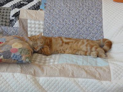 猫がクッションを枕代わりにして寝ています。