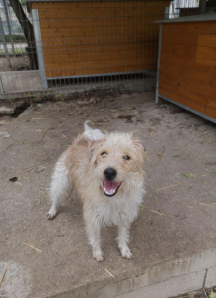 ROCKY - x fox 2 ans - Refuge les Murailles à Nimes (30)  ROCKY