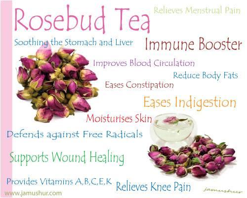 Benefit Of Drinking Rose Bud Tea
