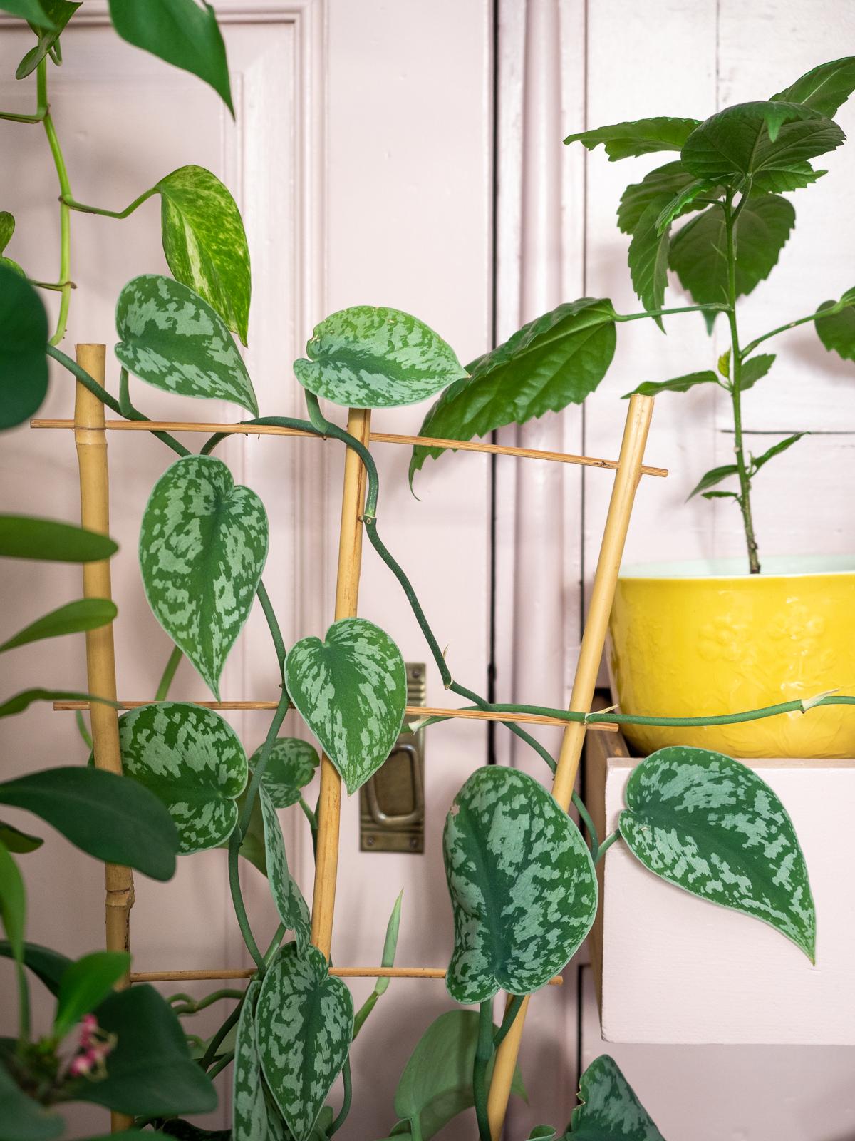miten saan viherkasvit kukoistamaan