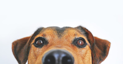 dog's whiskers