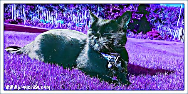 Sunny Sauce  @BionicBasil® Caturday Art