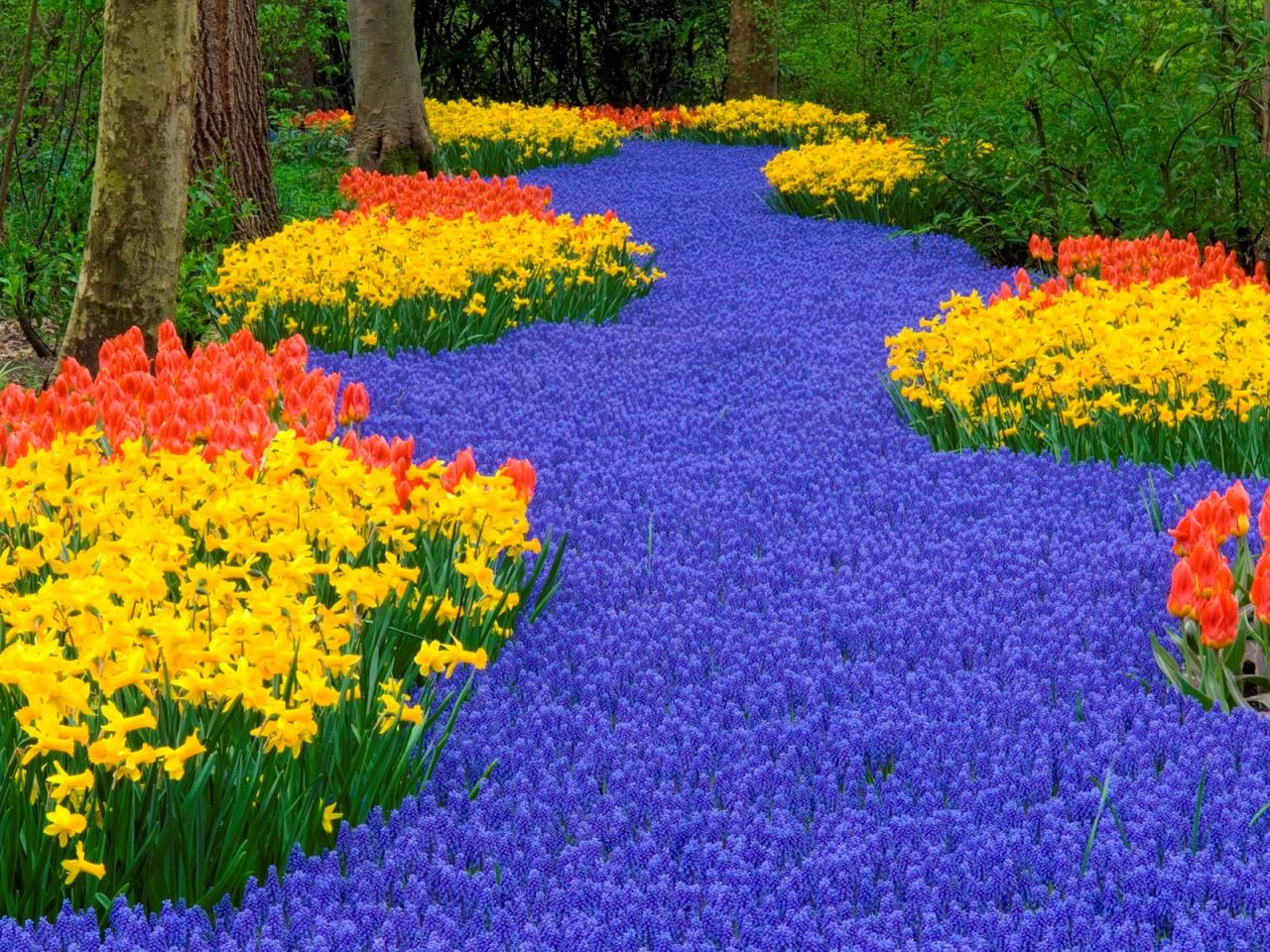Разноцветные клумбы парка Кекенхоф