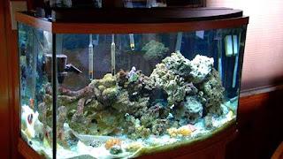 Aquarium labi-labi bayi tidak perlu hiasan