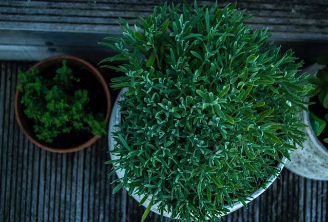 plants,aloe vera,sunflower,cactus,hibiscus,tree,bamboo,hydrangea