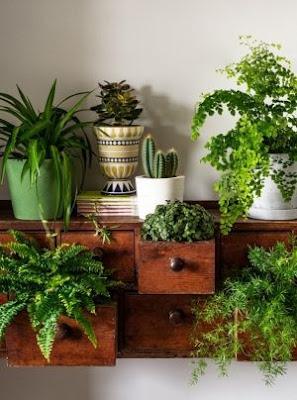 decoração-plantas-na-gaveta