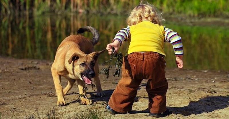 Επιθέσεις σκύλων σε παιδιά: πού οφείλονται και πώς θα τις προλάβουμε;